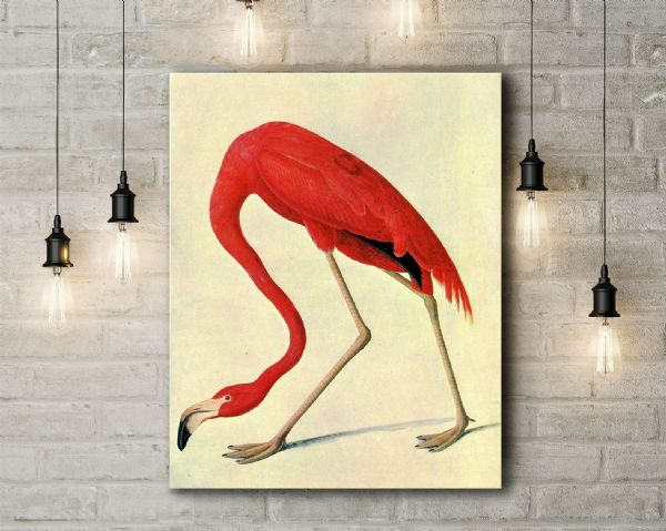 Audubon, John James: American Flamingo. (Ornothology/Bird) Fine Art Canvas.
